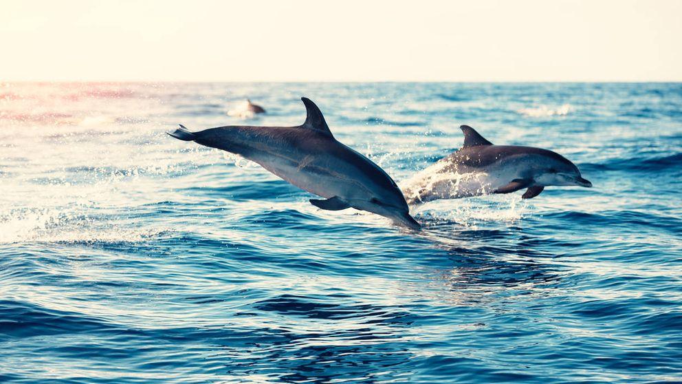 Las misteriosas muertes de delfines y los detectives que las están resolviendo