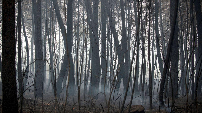 Detenido un hombre tras causar un fuego por una imprudencia en Ourense