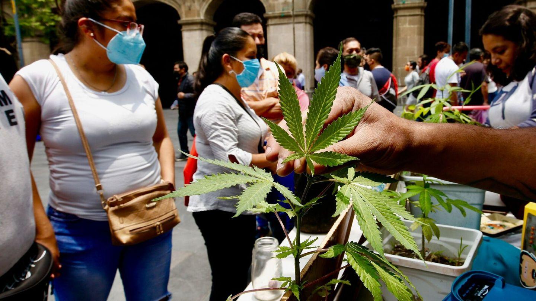 Manifestación a favor del consumo de la marihuana en la Ciudad de México. (EFE)