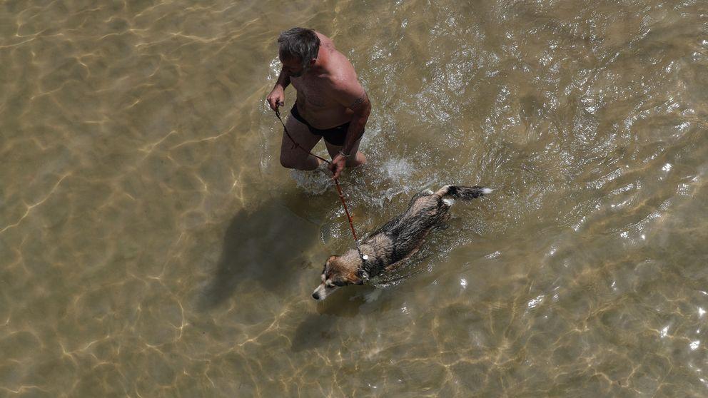 Playas para perros 2018: adónde ir con tu mascota este verano