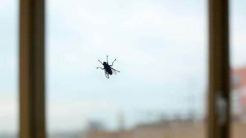 ¿Por qué es tan difícil cazar una mosca? Este es el secreto de su éxito