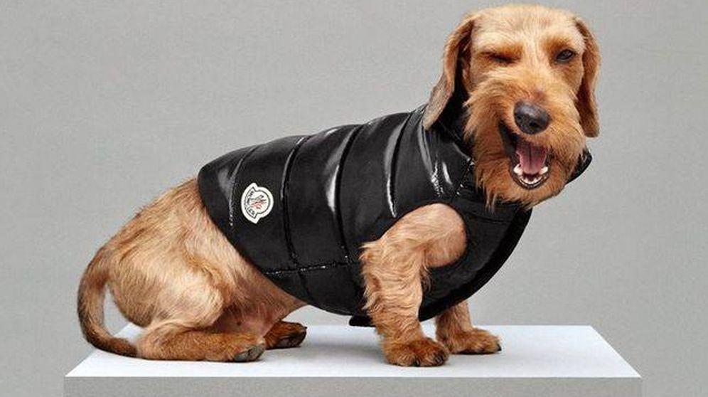 Foto: Hasta la firma Moncler ha sucumbido a los encantos de los perros. (Cortesía de la firma)