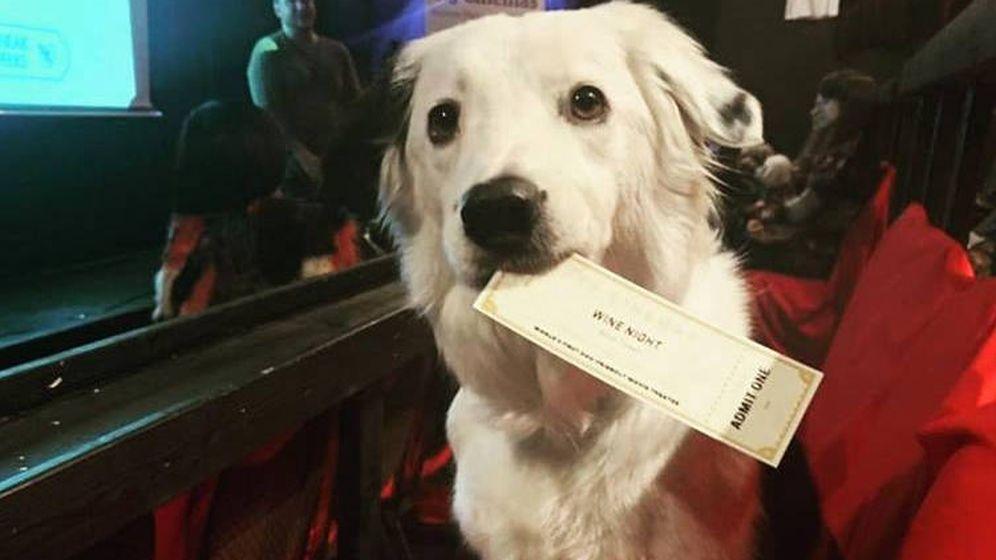 Foto: Las mascotas tienen su propia entrada para acceder a la sala (Foto: Facebook)