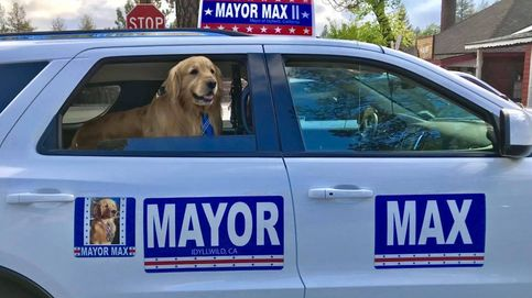 Un golden retriever repite como alcalde en un pueblo de California