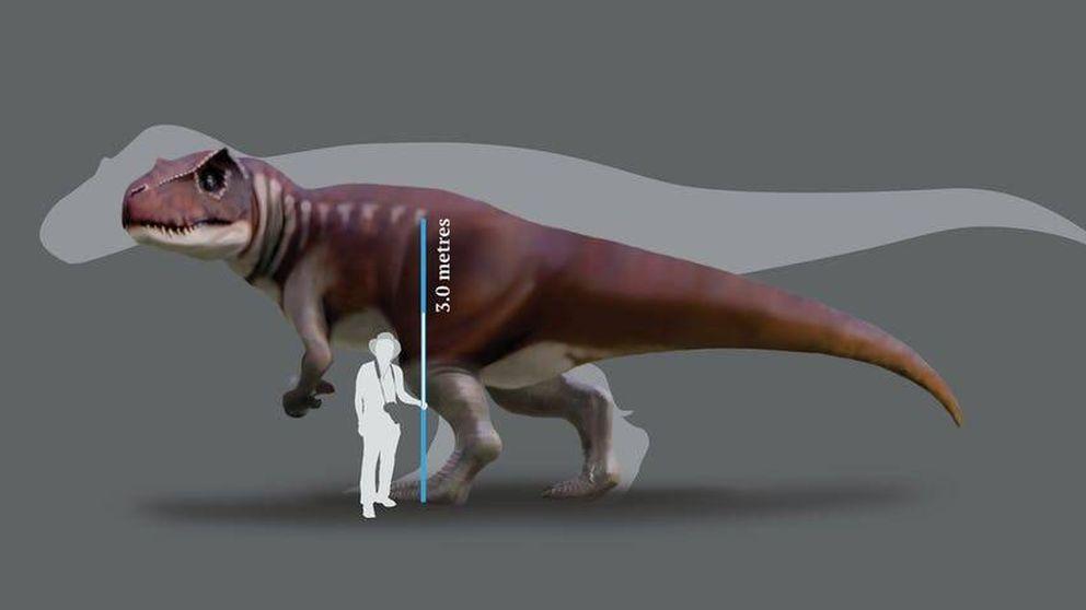 Australia también tuvo su particular Tiranosaurio Rex