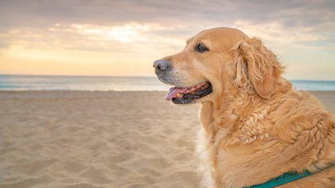 Playas para perros en España: consulta las costas a las que pueden ir estas vacaciones