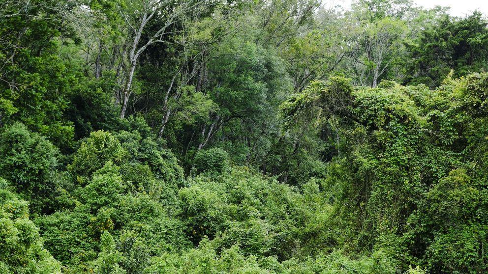 Casi 4 de cada 10 especies de plantas,  en peligro de extinción por la crisis climática