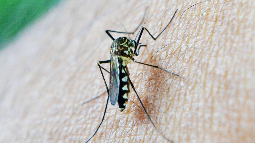 Foto: Un mosquito se posa sobre la piel de una persona | Pixabay