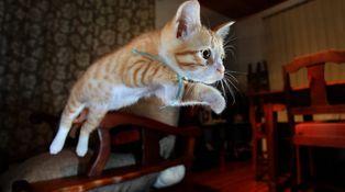 El rebote del gato muerto (segunda parte)