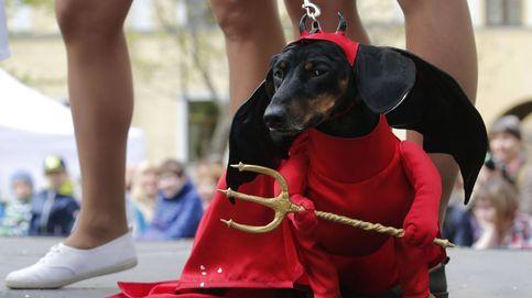 Un perro con piel de diablo