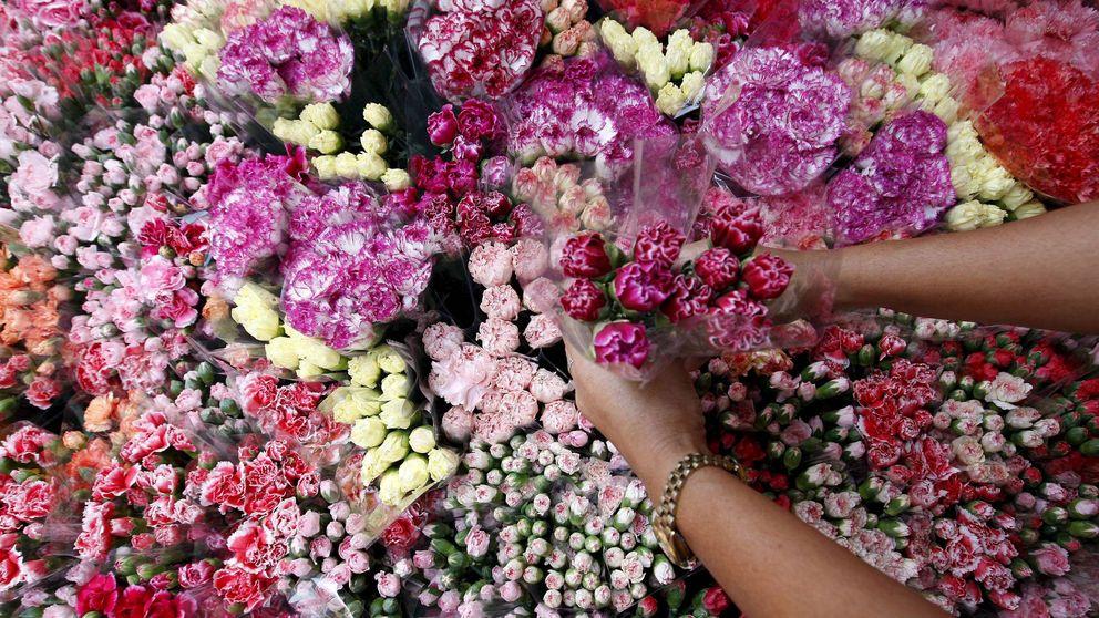 La guerra de las flores en Madrid