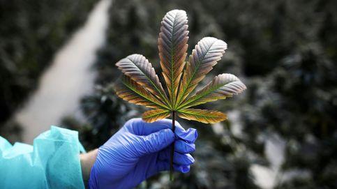 El gigante canadiense Aurora trae su cannabis a España con el exCEO de 'Ara'