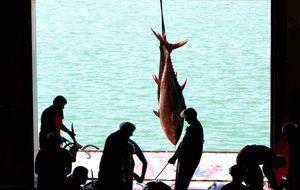 El arte del 'ronqueo' del atún, en la cocina de El Campero, en Barbate