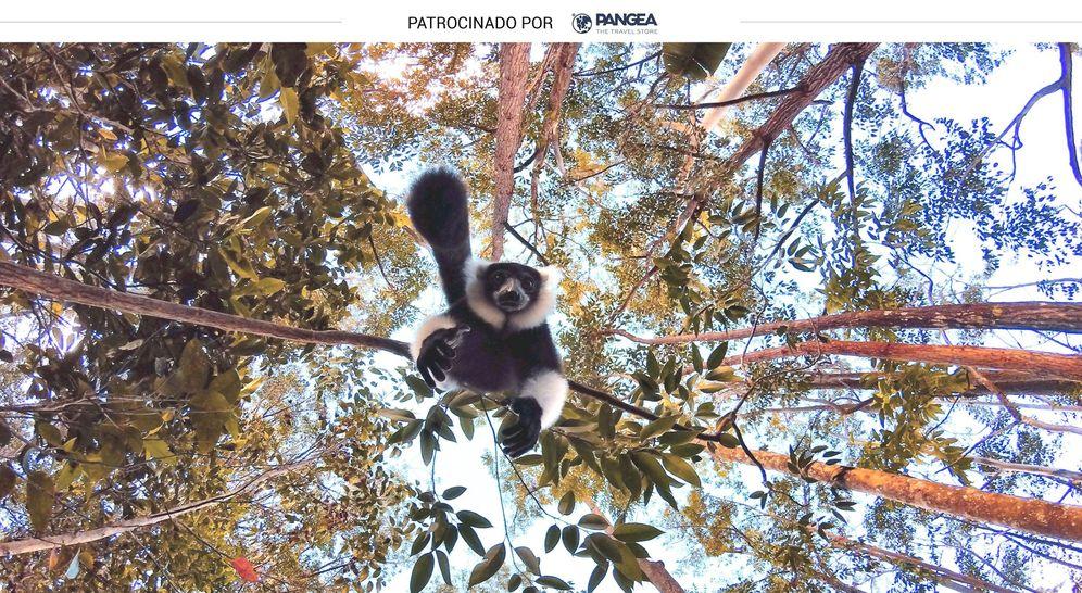 Foto: Un lémur de los que pueden encontrarse en Madagascar. (iStock)