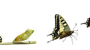 La metamorfosis de los 'value'