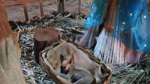 Adoptan a un perro callejero que dormía en un belén
