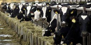 Foto: Condena millonaria contra la industria láctea por superar la cuota de Bruselas