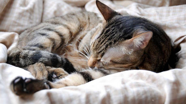 Un gato duerme sobre una túnica | Pxhere