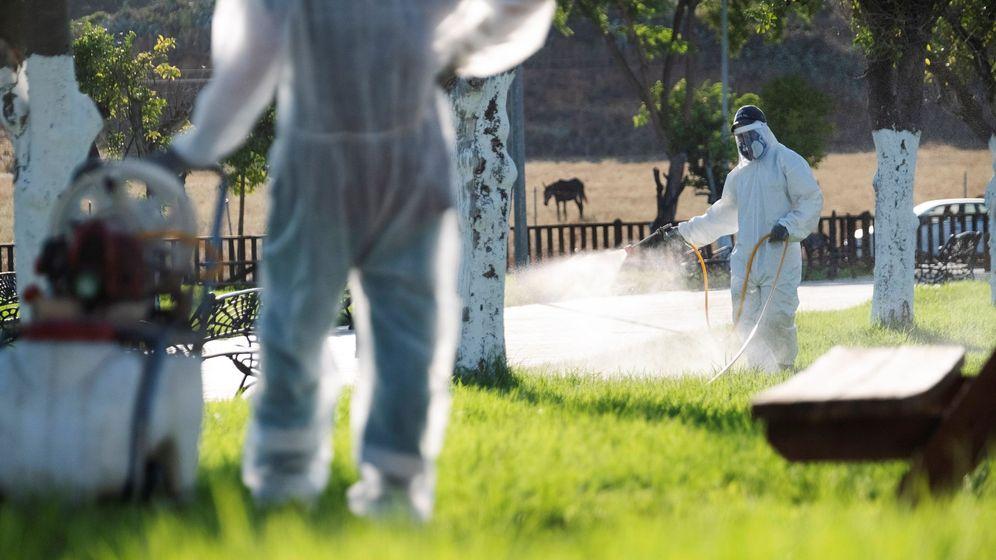 Foto: Fumigan la puebla (sevilla) para combatir al mosquito del virus del nilo