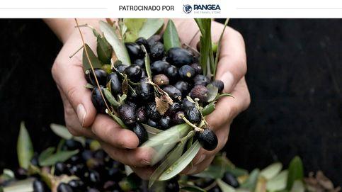 Del aceite conquense a la miel de la Alcarria: visita a almazara y colmena