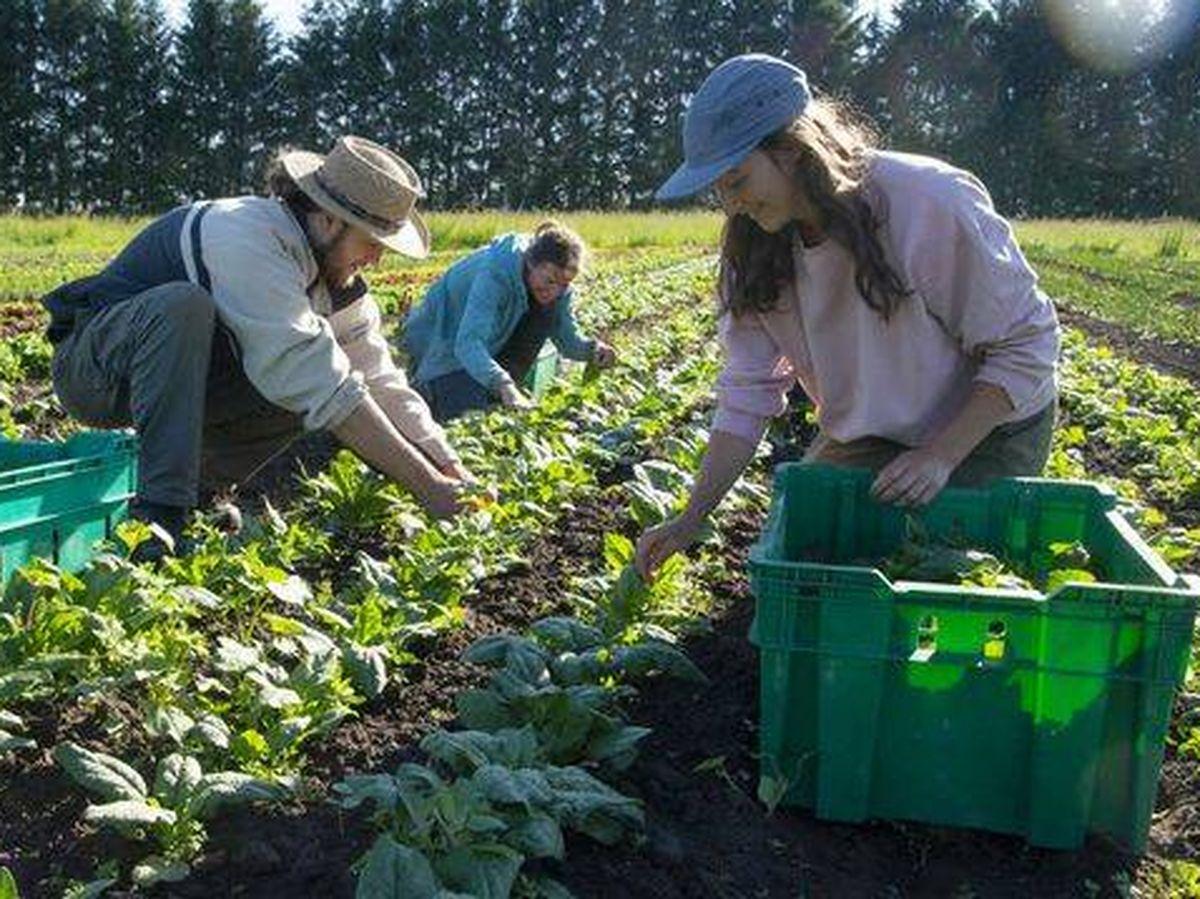 Foto: Esta iniciativa permitirá a los agricultores ecológicos tener más márgenes de beneficios. Foto: iStock