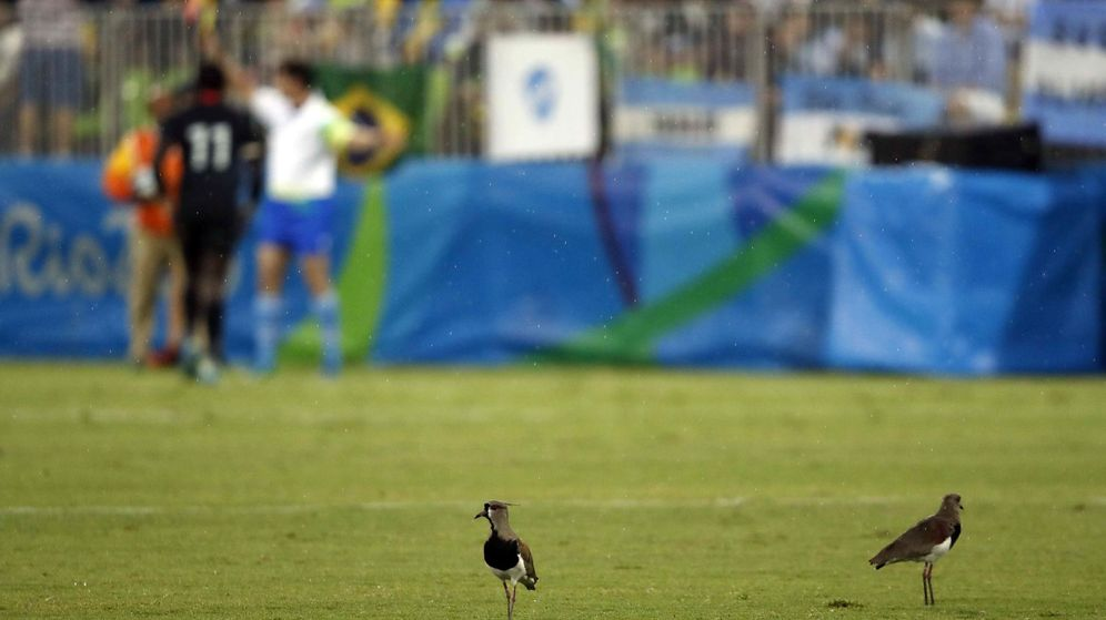 Foto: ¿'Matar dos pájaros de un tiro' es discriminatorio? (EFE/Elvira Urquijo)