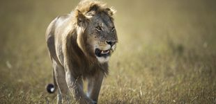 Post de Las leyes del Serengeti: el secreto de la vida al fin desvelado