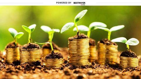 Cómo elegir el mejor fondo de inversión para ganar dinero