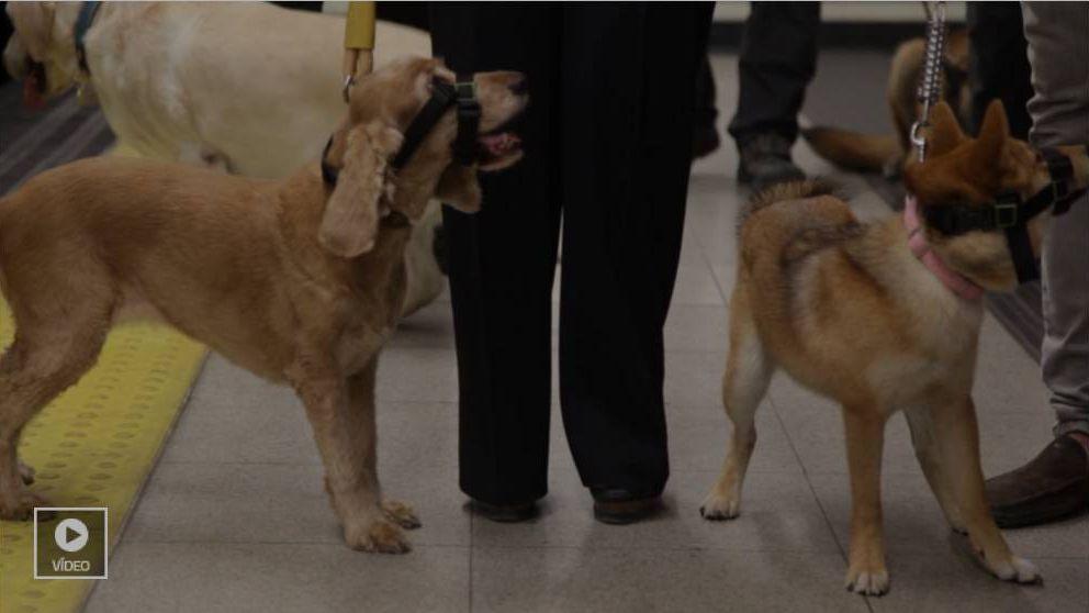 Los perros ya viajan en metro por Madrid a pesar de los dueños guarros