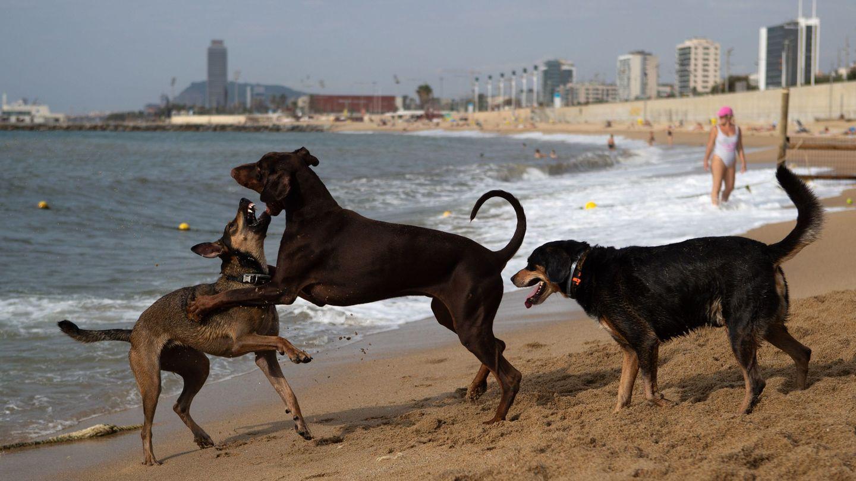Los dueños de animales deben cuidar su dieta (EFE/Enric Fontcuberta)