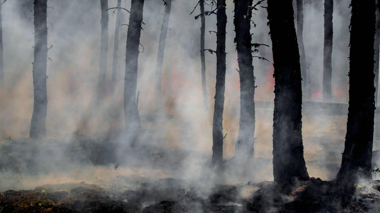 Un bosque calcinado tras el paso de las llamas. (Unspash)