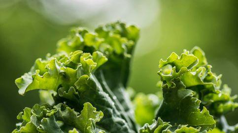Brócoli, kale y bimi: un debate a tres bandas con un claro ganador