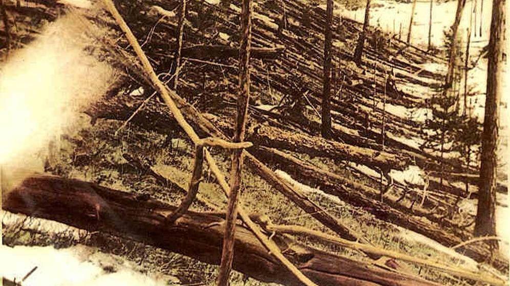 Foto: Así quedaron los árboles en la zona de Tunguska. (CC/Wikimedia Commons)