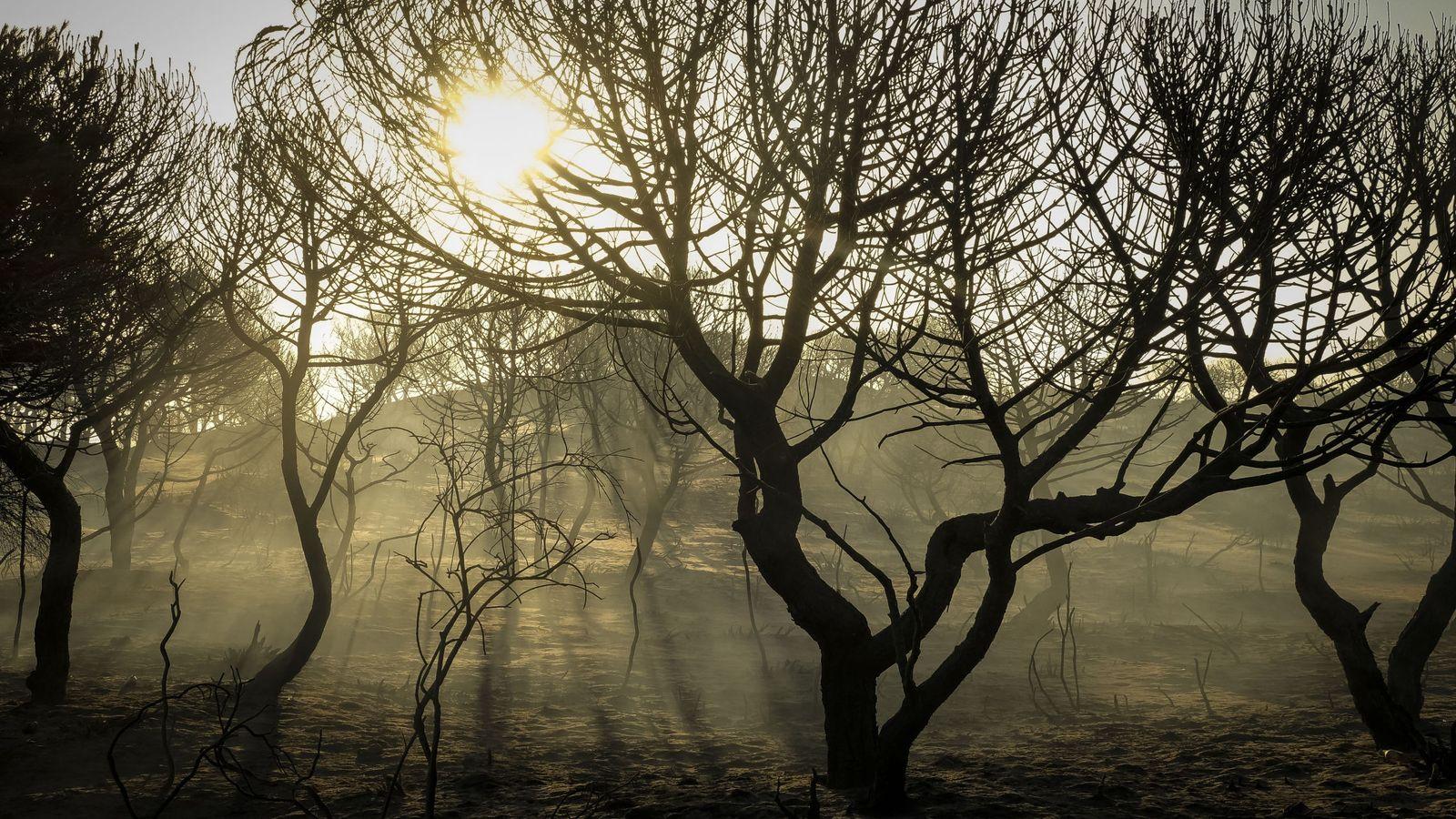 Foto: Paraje de Cuesta Maneli tras el incendio (EFE)