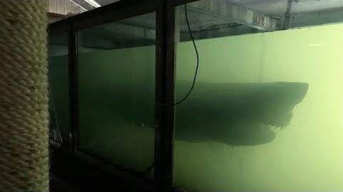 Un tiburón en un parque acuático abandonado