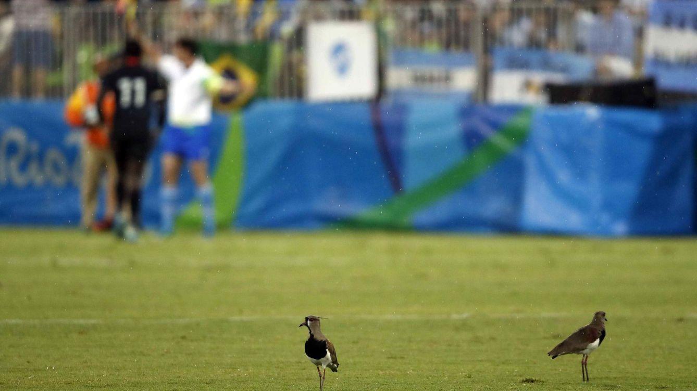 Los animalistas piden eliminar frases como matar dos pájaros de un tiro