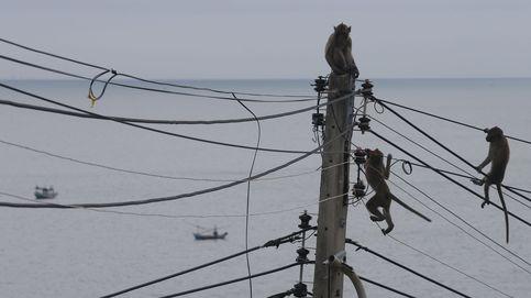 Los monos en Tailandia