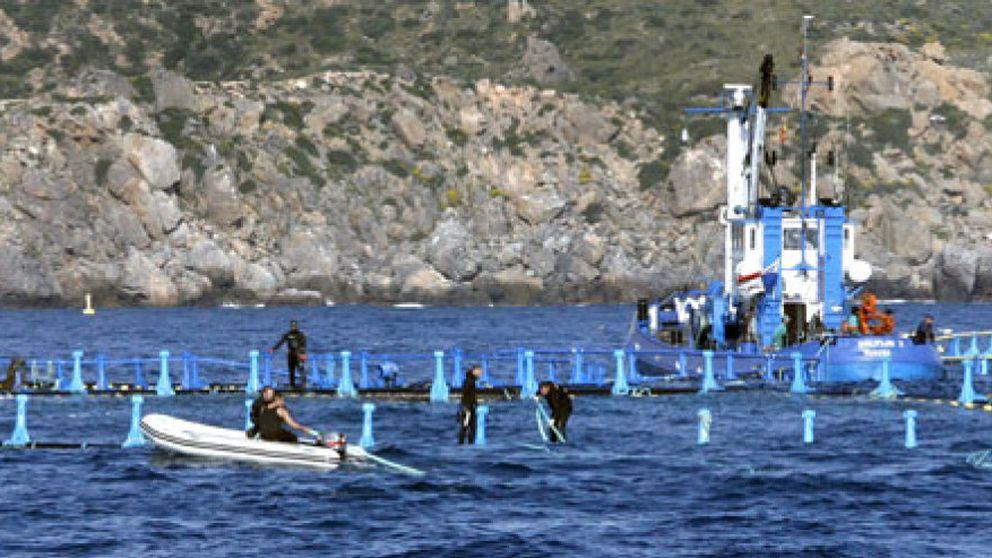 Estalla la 'guerra del atún': los pescadores andaluces acusan a los catalanes de esquilmar el Mediterráneo