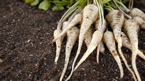 Sácale partido a la chirivia, una raíz saludable que da juego