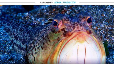 Águilas de mar, peces araña y gusanos del diablo: la vida en los fondos arenosos