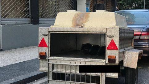 Decomisan 120 kilos de bonito transportados en un remolque para perros para su venta