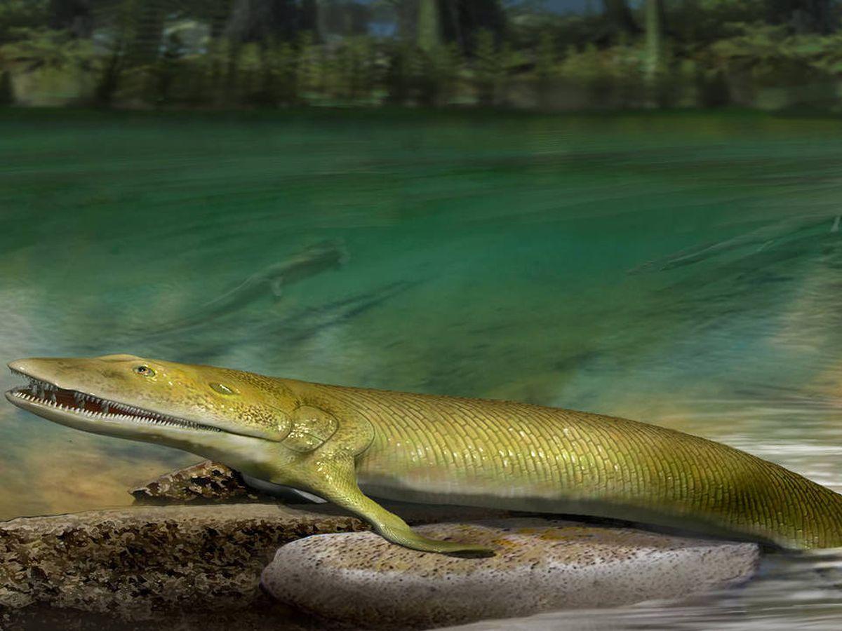 Foto: Interpretación artística de un pez Elpistostege. Foto: Katrina Kenny / Universidad de Flinders