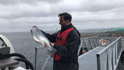 Mario Sandoval: El pescado de acuicultura más logrado que existe es el salmón