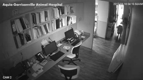 El perro que huyó del veterinario para disfrutar de su libertad