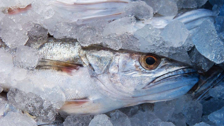 El pescado fresco jamás debe romper la cadena de frío.