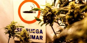 Foto: Fumar marihuana es especialmente perjudicial durante la adolescencia