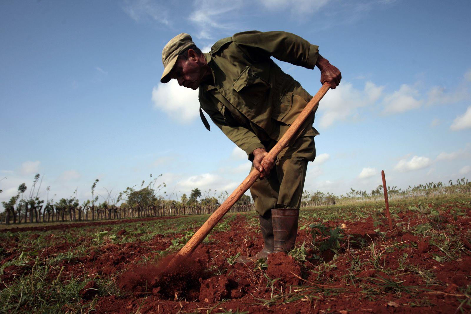 Foto: Un granjero cubano trabaja la tierra en La Lisa, en las afueras de La Habana, en marzo de 2014. (Reuters)