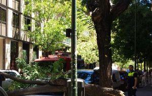 Un comité de expertos para atajar la caída de árboles en Madrid