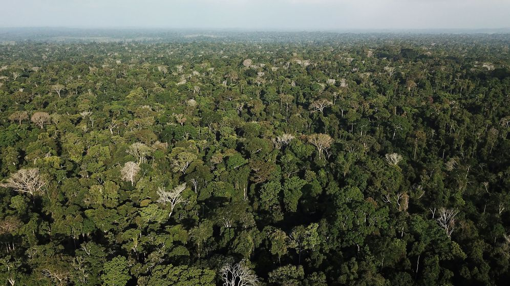 Foto: ¿Han encontrado El Dorado? Hallan una ciudad perdida en la selva colombiana. (Reuters)