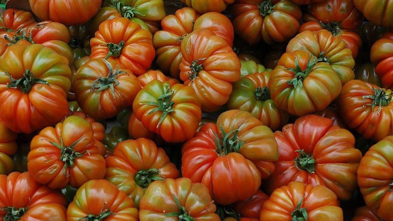 Tomates raf.